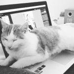 Getting things done  NOT hustle gettingthingsdone catdistraction catsofinstagram businesshellip